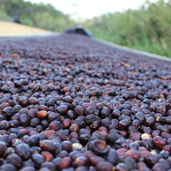 Classic natural (fermentation)