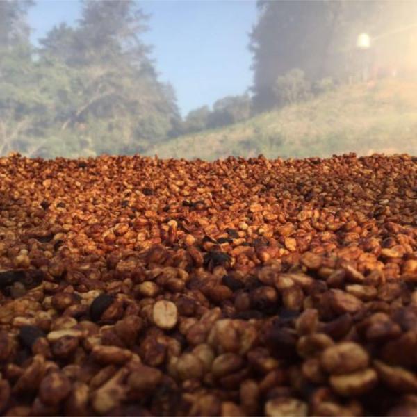 Honey (fermentation)