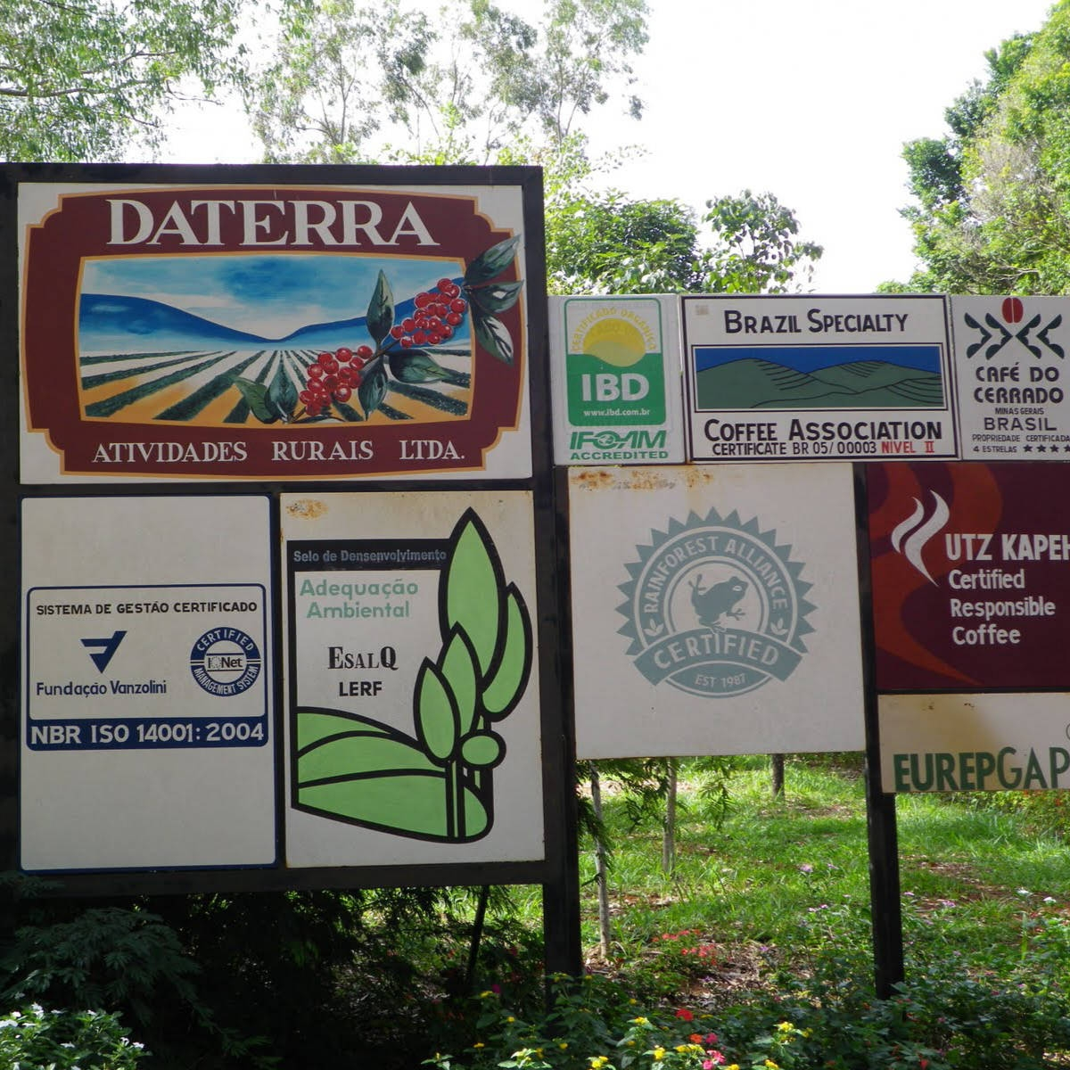 Daterra Masterpieces, Ciranda lot (story)
