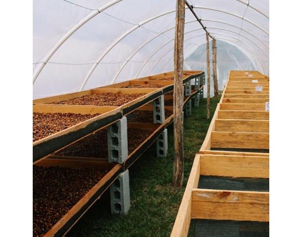 72hrs maceration-natural (fermentation)