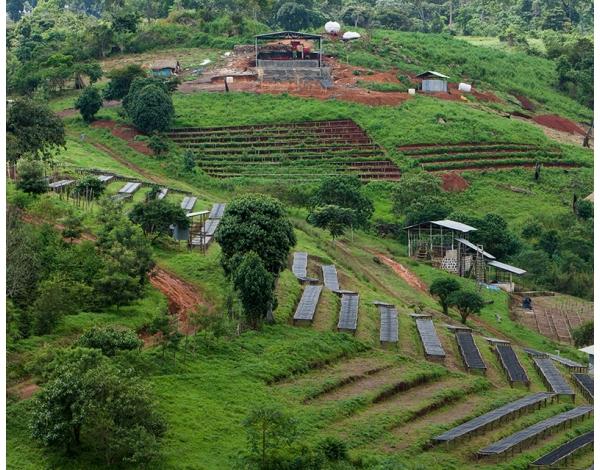 Gesha Village (story)