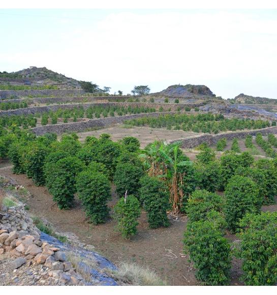 Gurmah Village (product)