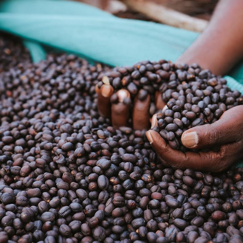 Mustefa Abakeno (variety)