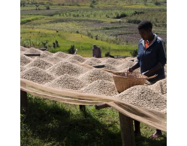 Ntarambo (fermentation)