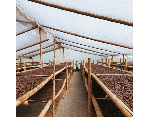 Villamaria Decaffeinated (fermentation)