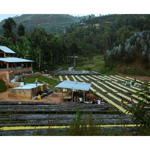 Kirambo, Lot 435 - Rwanda (fermentation)
