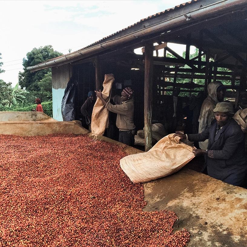 Muchagara AB - Kenya (fermentation)