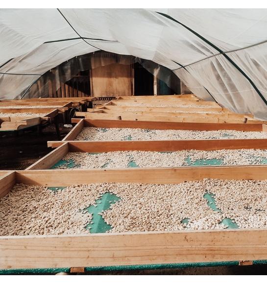 Finca Santa Elena - Peru (fermentation)