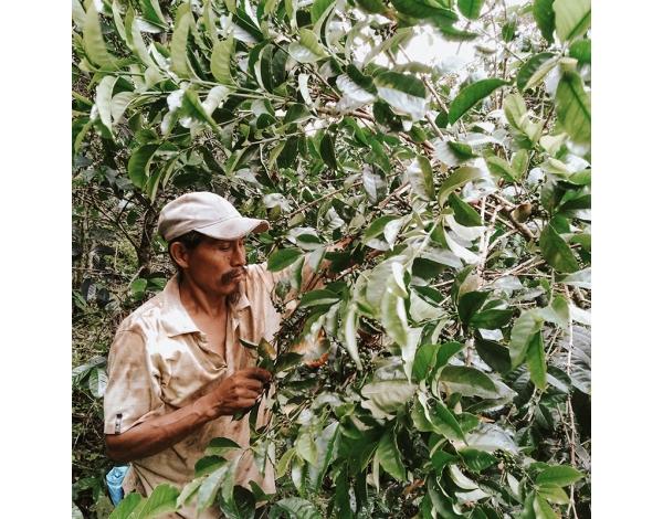 Finca Santa Elena - Peru (product)