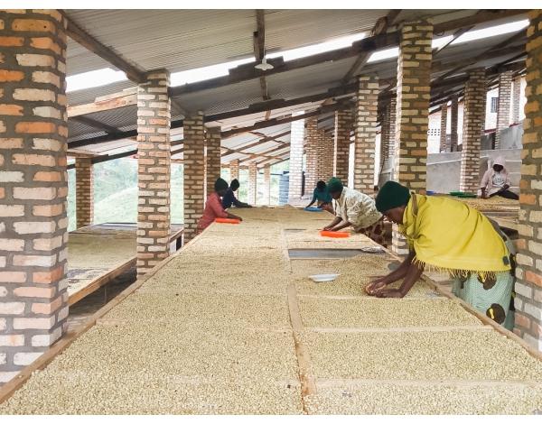 Bwenda, Lot 682 - Rwanda (product)