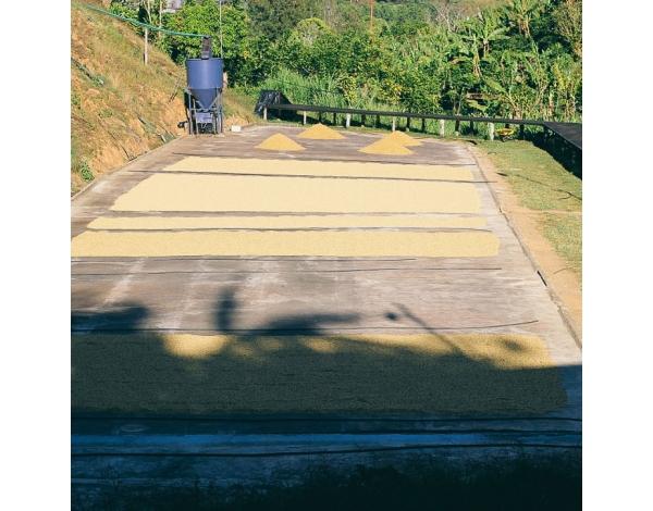 La Candelilla - Costa Rica (fermentation)
