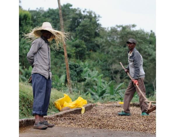 Sagara Lot 3 - Ethiopia (story)