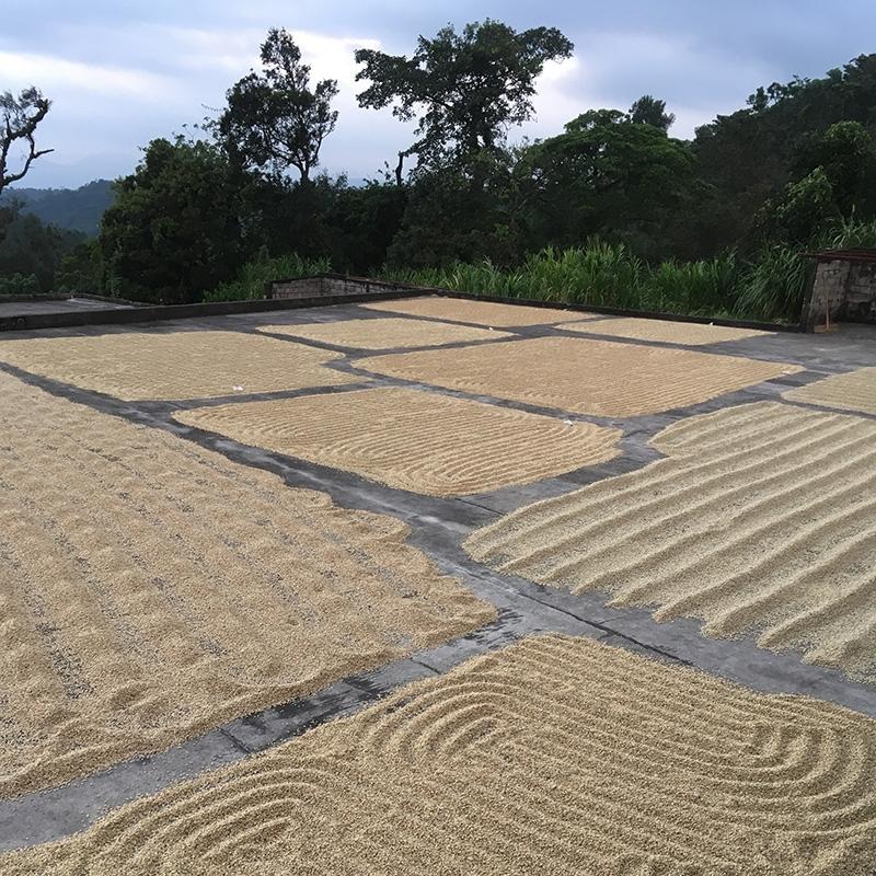 Yalan Huihuit'z  - Guatemala (fermentation)