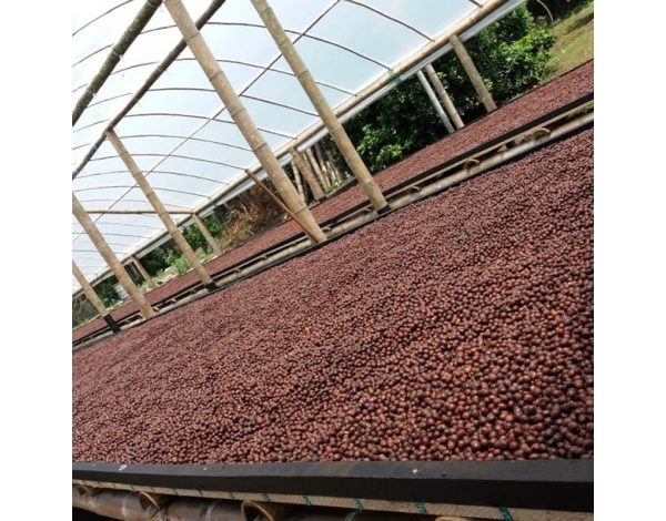Finca Palmichal  - Colombia (fermentation)