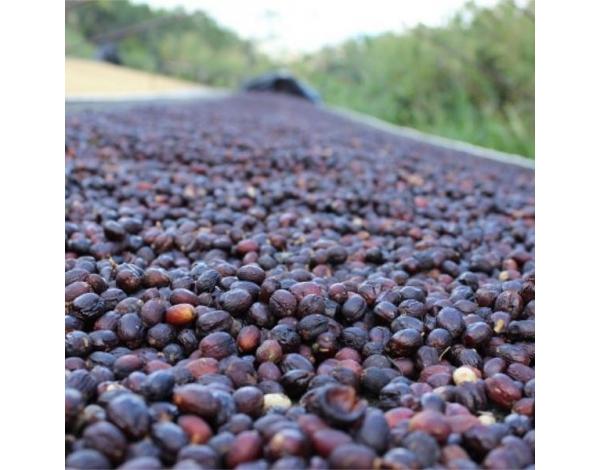 Macaúba de Baixo - Brazil (fermentation)