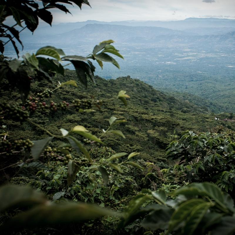 Finca El Salvador - El Salvador (story)
