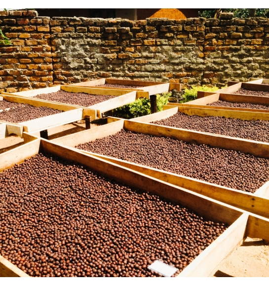 Mzungu Project - Uganda (fermentation)