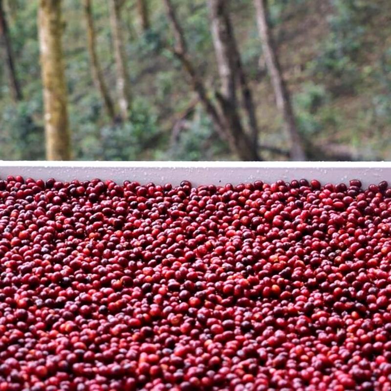 Ninetyplus Competition Set - Panama (fermentation)