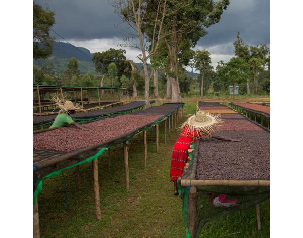 Duwancho - Ethiopia (product)
