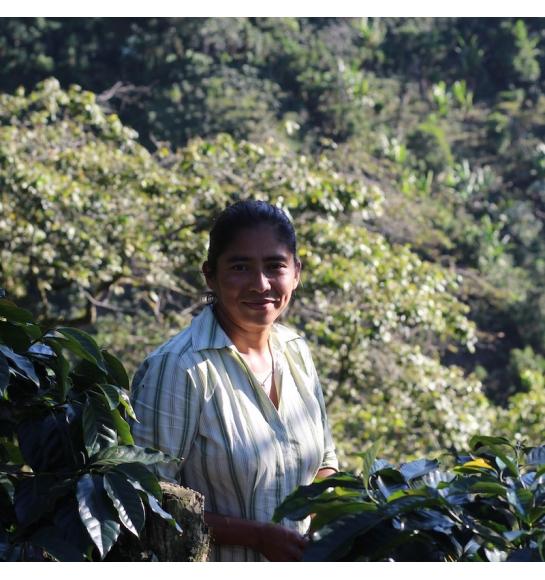 El Colibri Esmeralda - Honduras (story)