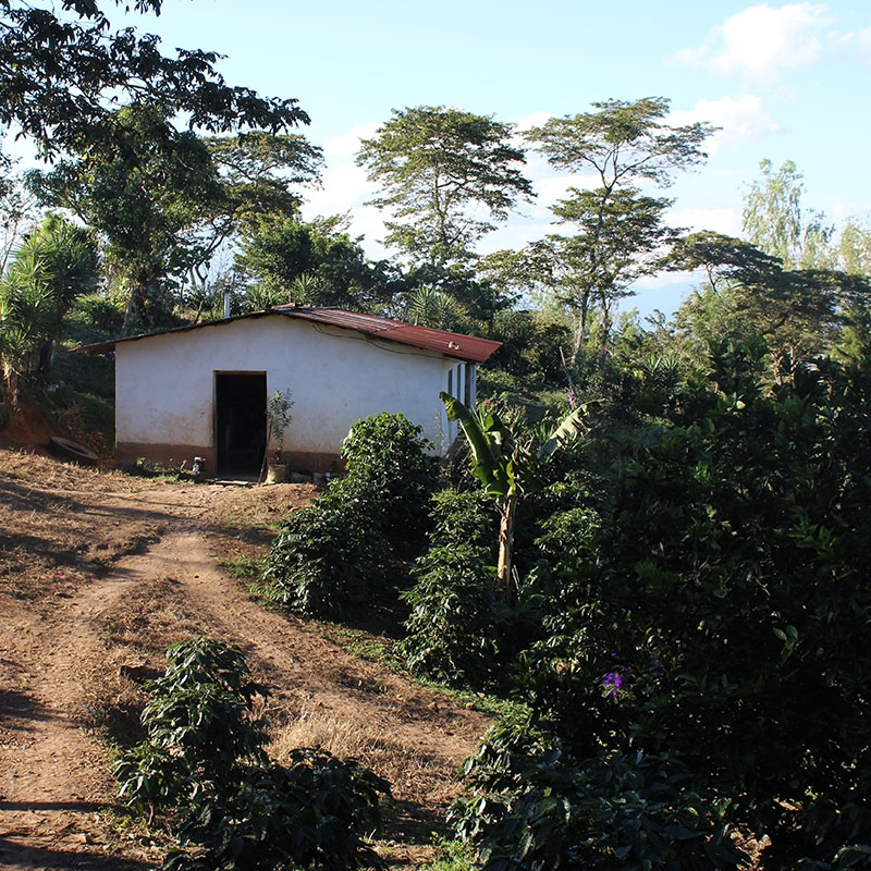 El Colibri Esmeralda - Honduras (fermentation)