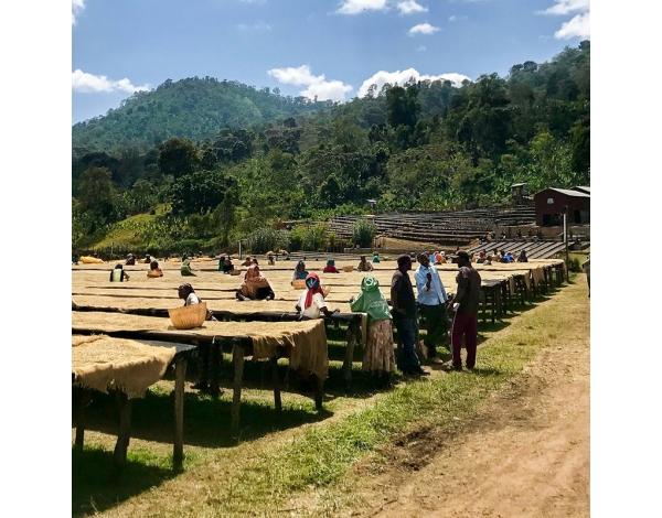 Halo Beriti - Ethiopia (fermentation)