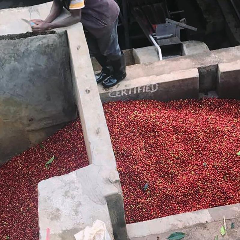 Gatare - Rwanda (variety)
