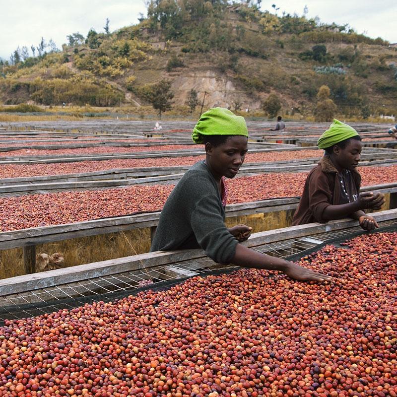Gatare - Rwanda (story)