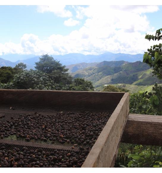 Victor Gavidia - Peru (fermentation)
