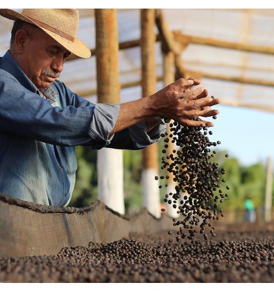 Sao Silvestre (Brazil) - product