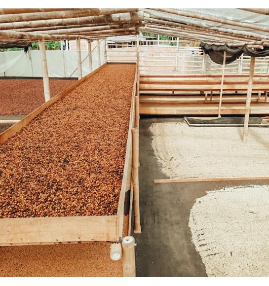 El Corozal (Colombia) - fermentation