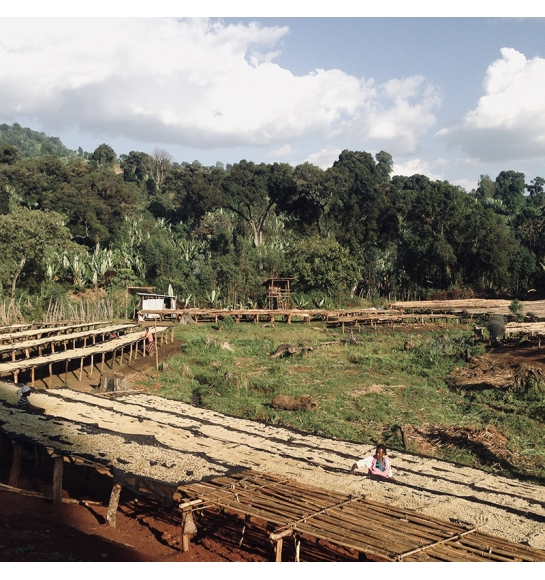 Gora Kone (Ethiopia) - variety