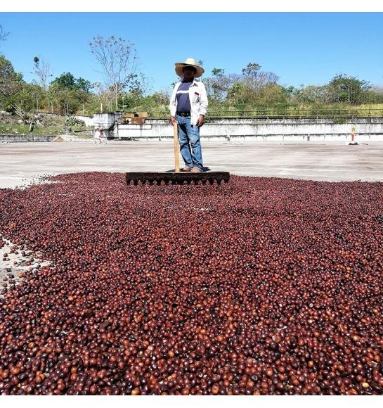 Doña Elvira (Panama) - fermentation