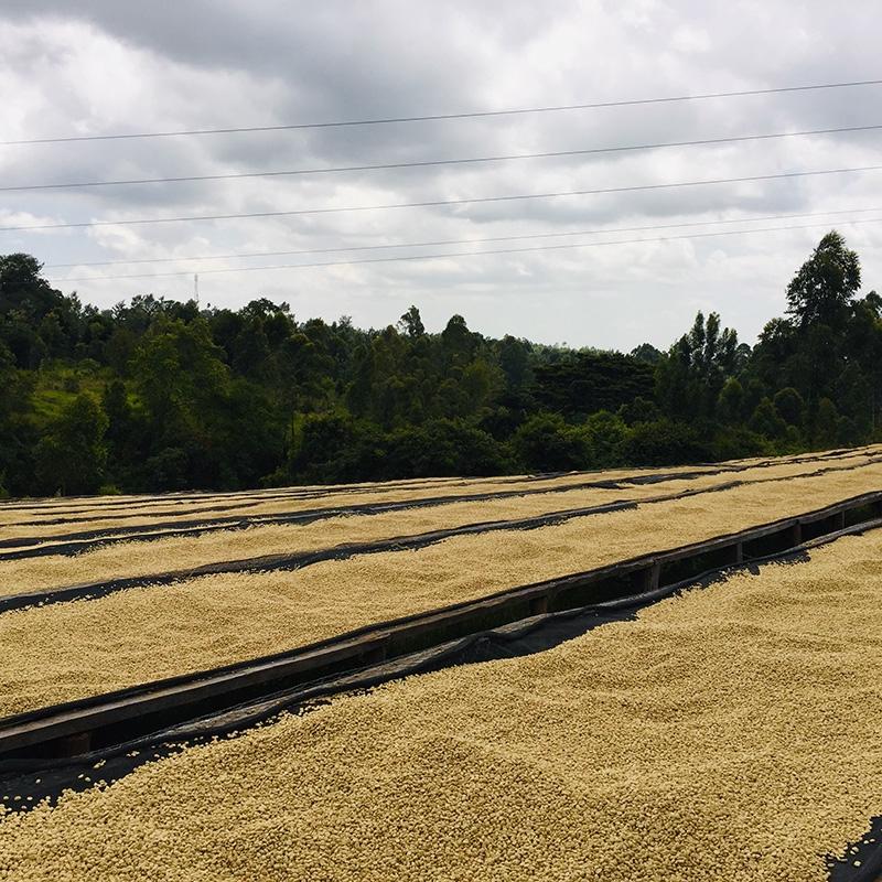 Ruarai (Kenya) - fermentation