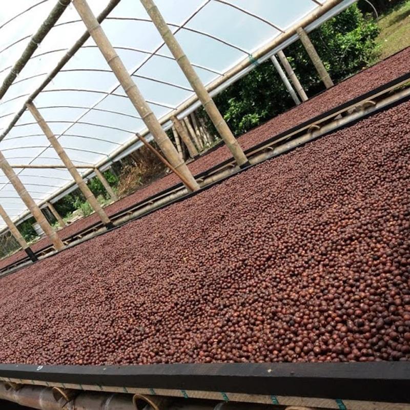 El Rubi - Colombia (Fermentation)