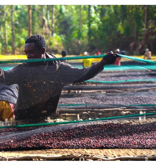 Odako (Ethiopia) - product