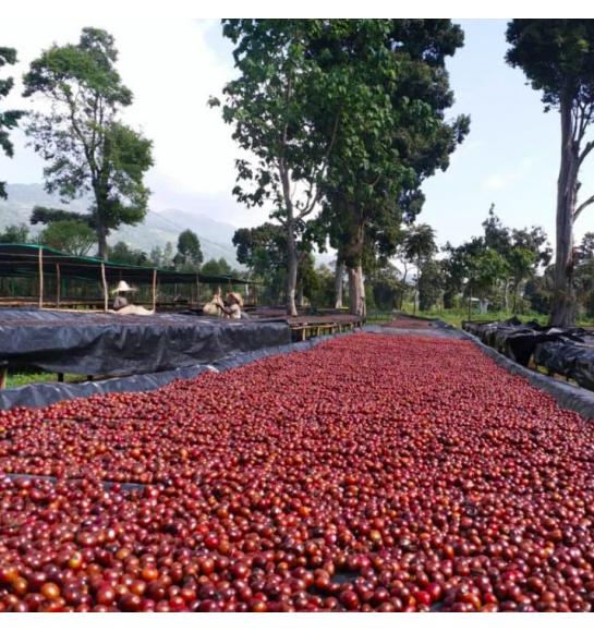 Odako (Ethiopia) - fermentation