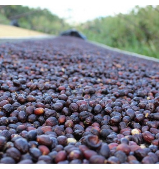 Natural (fermentation)